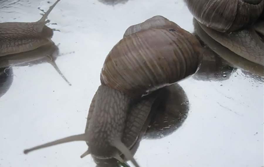 Snail Traffik